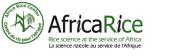 Africa Rice