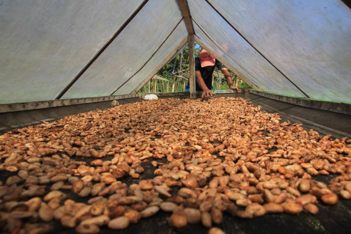 Boosting sustainable cocoa production on the Indonesian island of Sulawesi together with Mars