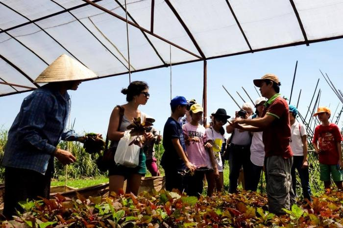 Scaling-up a consumer education programme on safe vegetables
