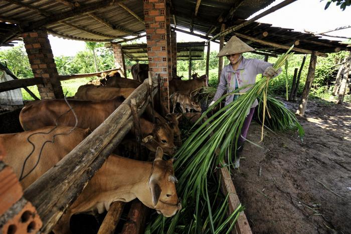 Thay đổi chế độ ăn có thể giúp hạn chế biến đổi khí hậu thế nào