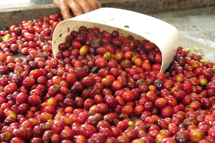 Estudio de calidad de taza en la zona de noroccidente de Quito