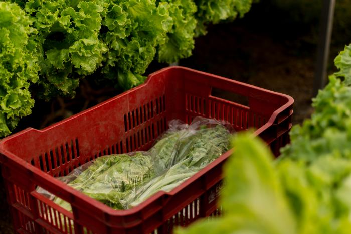 Producir alimentos: una labor a prueba de huracanes y pandemias en Honduras