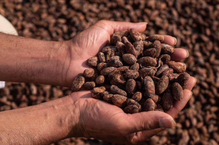 """Claves para """"cosechar"""" sostenibilidad, resiliencia e ingresos dignos en el sector cacao de Latinoamérica"""