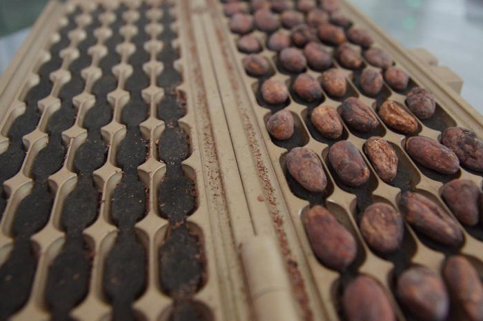 Beyond Chocolate: an agreement for sustainable Belgian chocolate