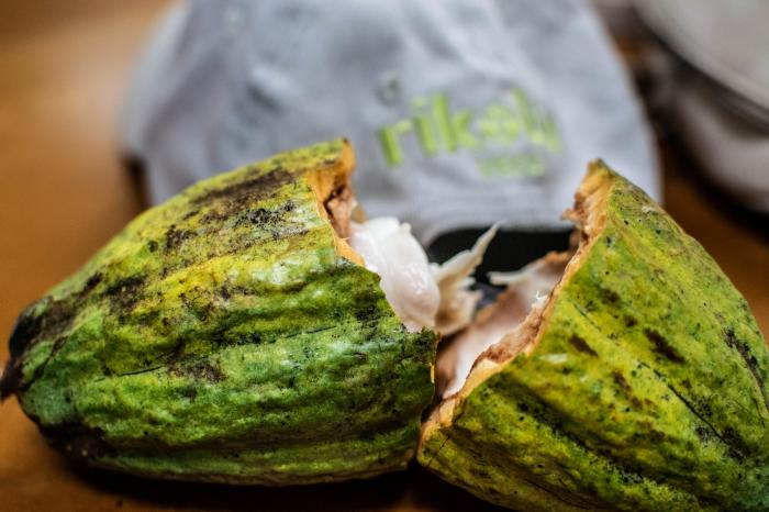 Rikolto Podcast: Cocoa agroforestry systems against the wind and the effects of climate change