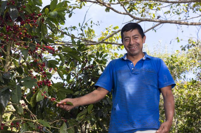 Cajamarca: a coffee-growing region with a model platform for Peru