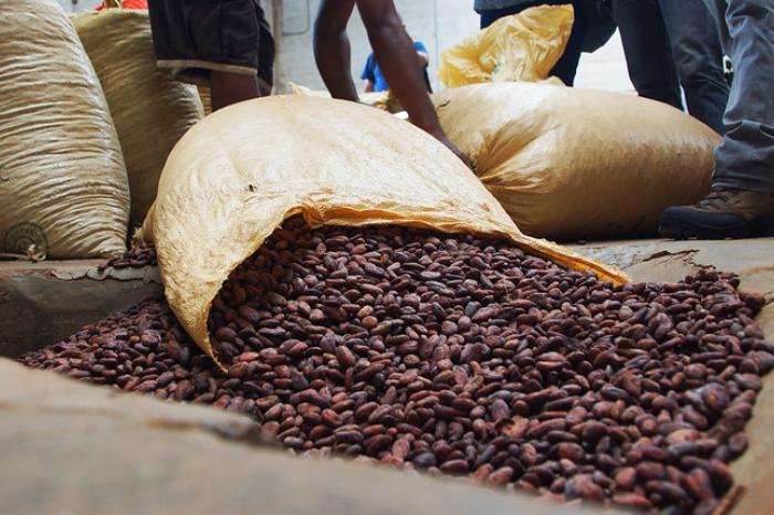 Dominicana nos enseña de cacao orgánico