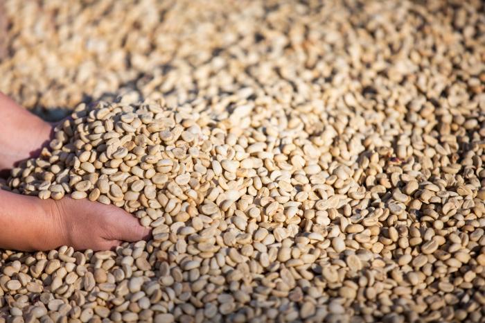 Nuevos estudios sobre legislación y caracterización de las fincas de café en Nicaragua