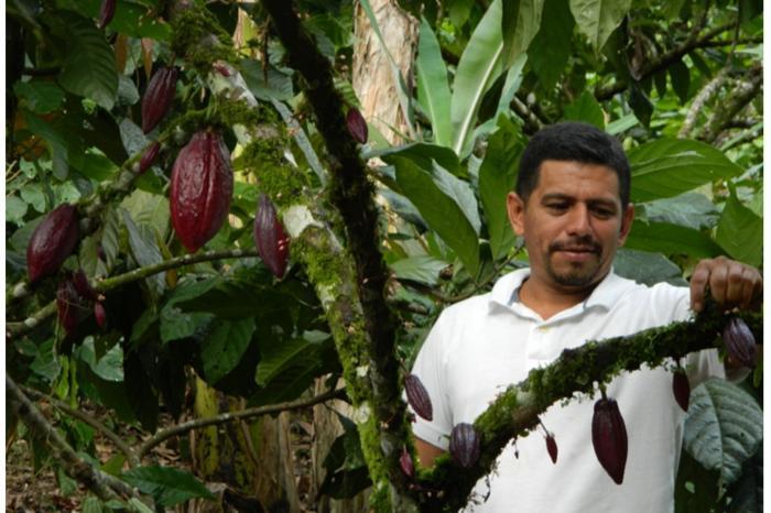 Cacao: un rubro bueno para prosperar.