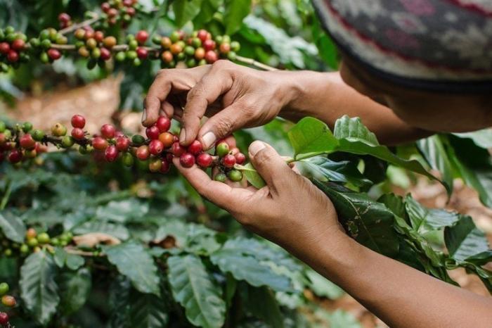 Perú y Ecuador en iniciativa global para definir criterios sobre profesionalización de organizaciones de productores