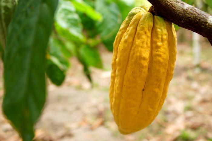 Alineando acciones para un cacao hondureño competitivo
