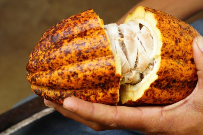 Honduras y Nicaragua buscan crecer más en mercados de cacao fino y de aroma