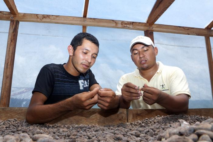 Boosting cocoa export from Honduras