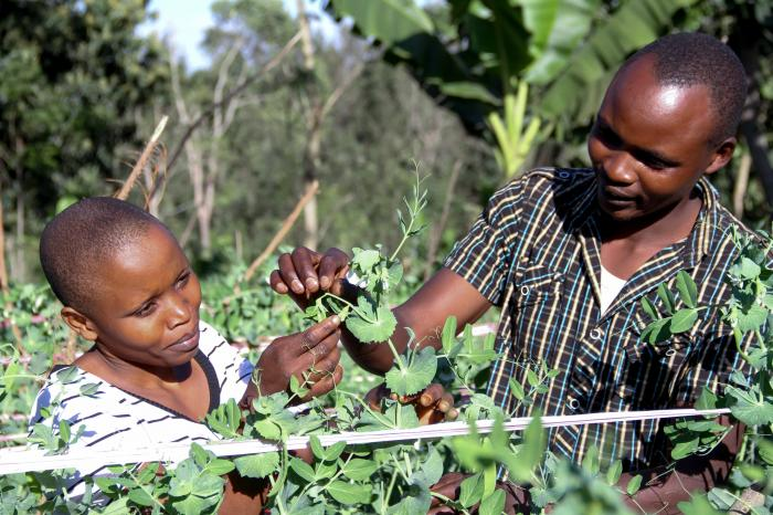Organized farmers – Key to inclusion of small-scale producers markets.