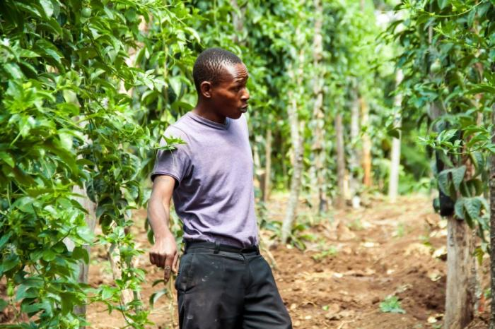 From a traditional bush vine fruit to a financial rewarding crop