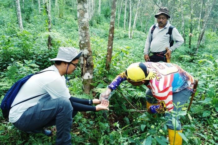 'Kopje per kopje' werken aan het behoud van uniek Indonesisch woud