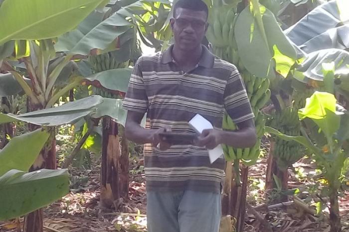La banane, une culture qui peut faire vivre son homme