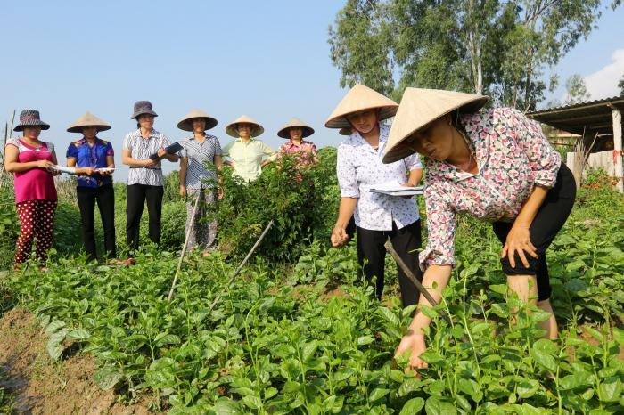 Nghiên cứu tình huống: PGS hữu cơ ở Thanh Xuân, Hà Nội – Một ví dụ về tính bền vững