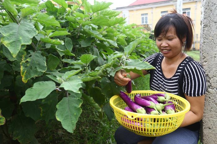 10 năm thực hiện Hệ thống cùng tham gia đảm bảo chất lượng ở Việt Nam – nghiên cứu tình huống