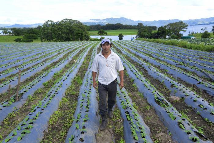 Reduciendo el riesgo financiero en la agricultura