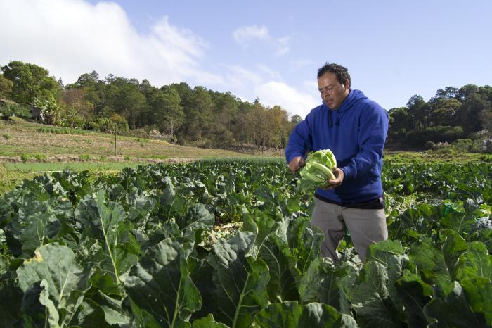 La alimentación mundial en manos de pequeños agricultores