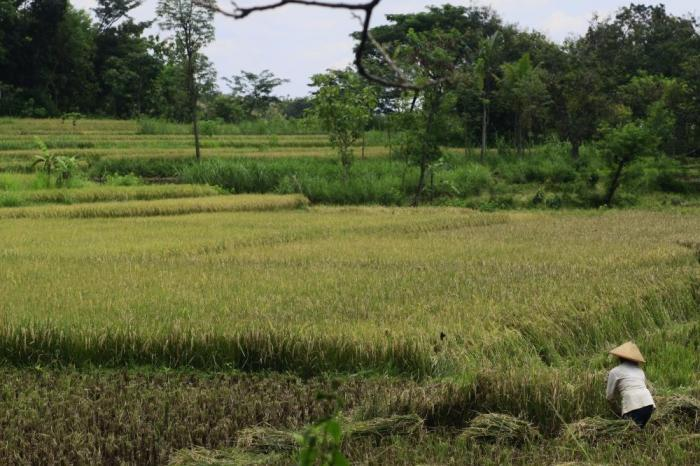 More Farmers Adopting Sustainable Agriculture