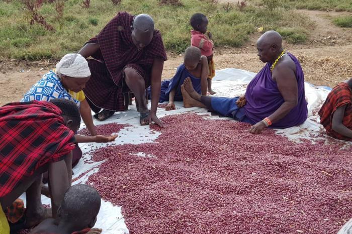 Belgische ondernemers stuwen Tanzaniaanse bonenverwerker vooruit met investering