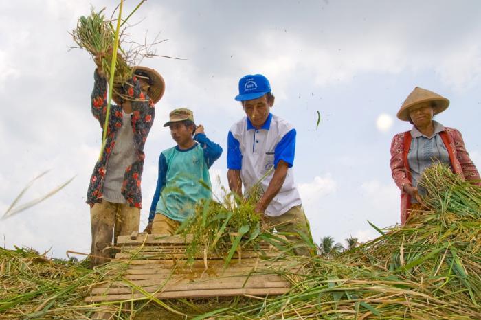 Een duurzame, biologische rijstketen in Indonesië