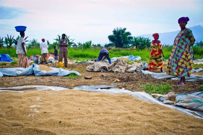 Boeren en brouwers tappen uit een ander vaatje in Oost-Congo