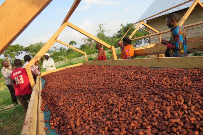 Congolese cacaoboeren geven smaak aan Belgische topchocolade