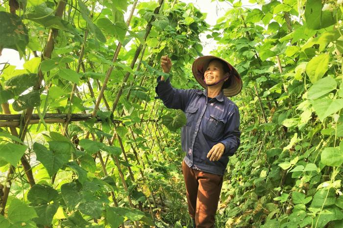 PGS model moves forward in Vietnam
