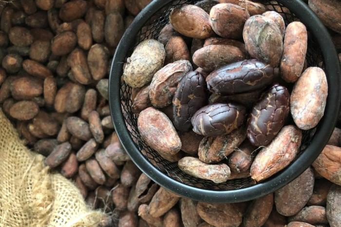 Cocoa from Chocoben sails to new markets with MOCCA