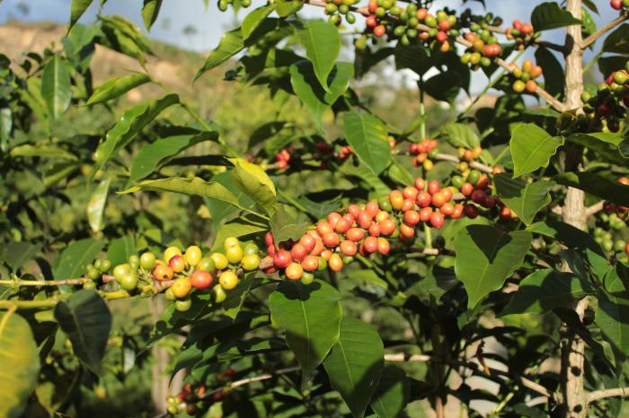 A study: Minimising the carbon footprint of organic coffee production
