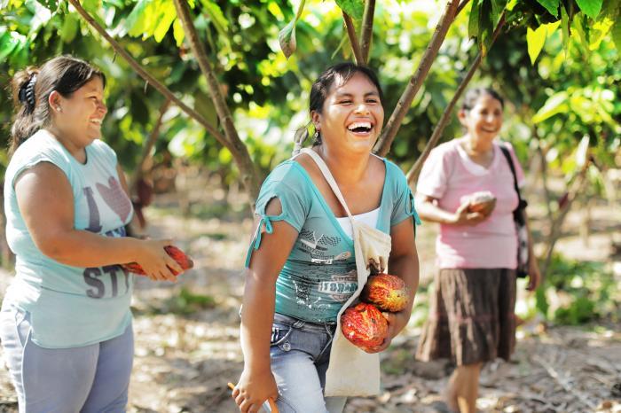 Perú: Cacao resiliente suma reconocimientos