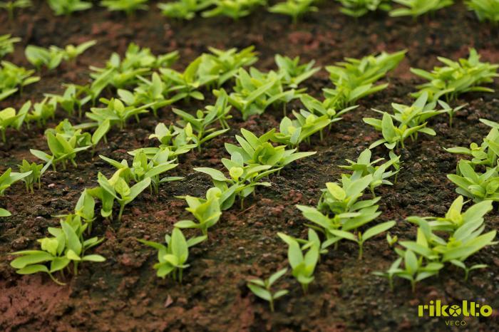 Khóa huấn luyện 15 ngày về phân phối bán lẻ nông sản an toàn
