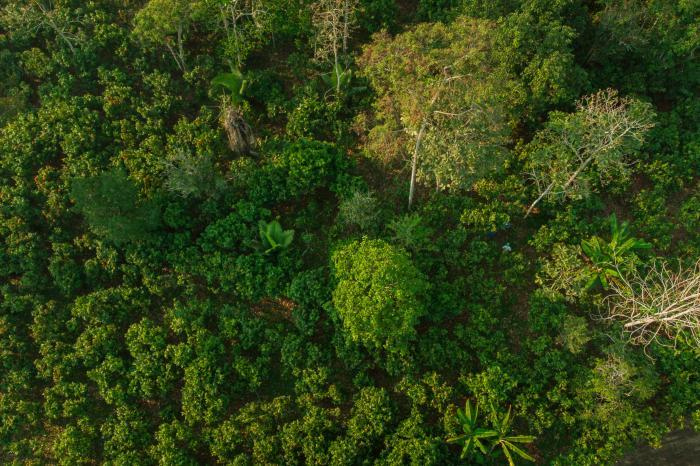 Sector privado, reforestación y agroforestería: construyendo valor para el negocio en Pangoa