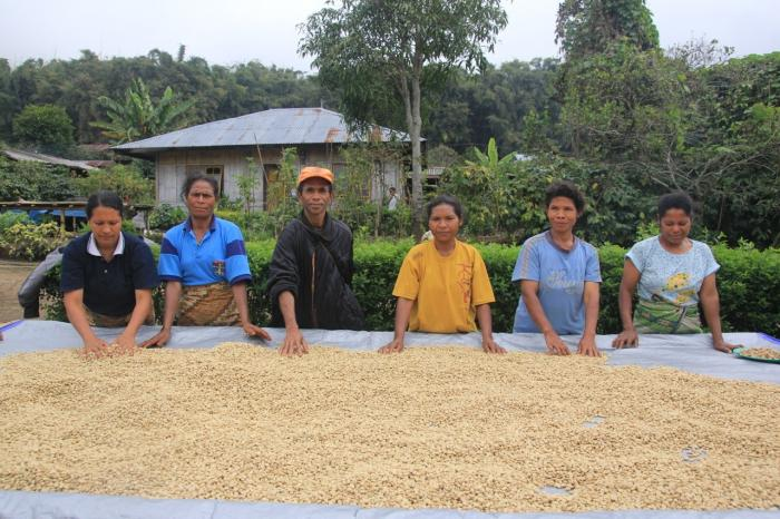 Coffee farmers help protect Flores forest in Indonesia