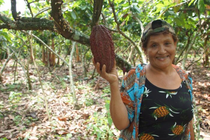 Nueva iniciativa latinoamericana incrementará productividad del cacao ecuatoriano