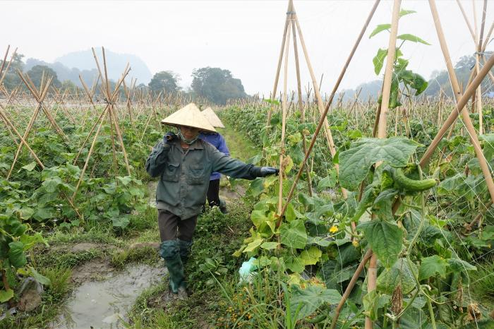 City of Da Nang in Vietnam adopts a Food Smart City strategy
