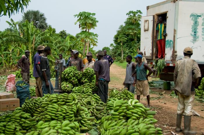 KAMPANI: a new investment fund for smallholder farmer organizations in the South
