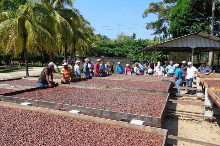 Viaje de Aprendizaje sobre cacao a realizarse en Honduras