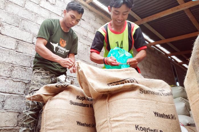 Barokah cooperative exports 15.6 tons of Arabica coffee beans to Belgium