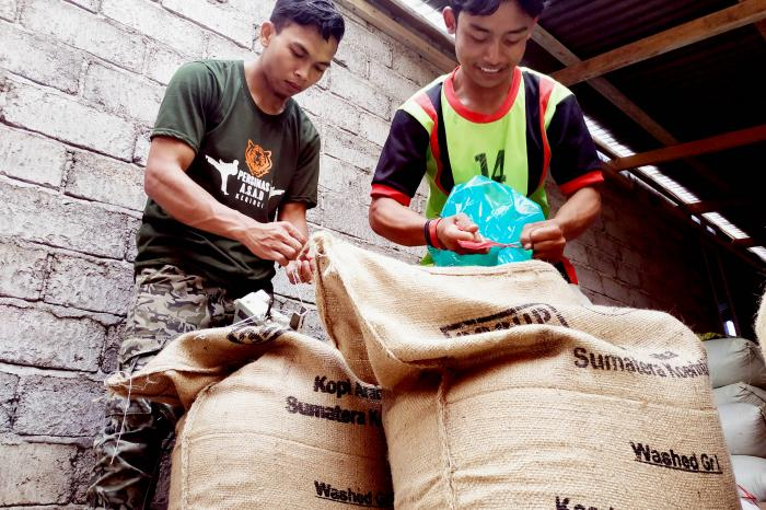 260 bags of sustainable green Arabica coffee beans from Indonesia on its way to Belgium