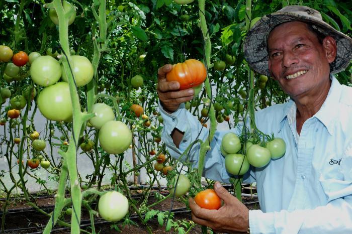 Estelí se suma a la Estrategia de Fomento y Desarrollo de la Producción Hortícola