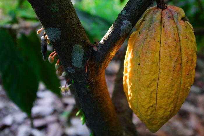 VECO Mesoamérica reafirma su apoyo a la cooperativa de cacaoteros de CACAONICA