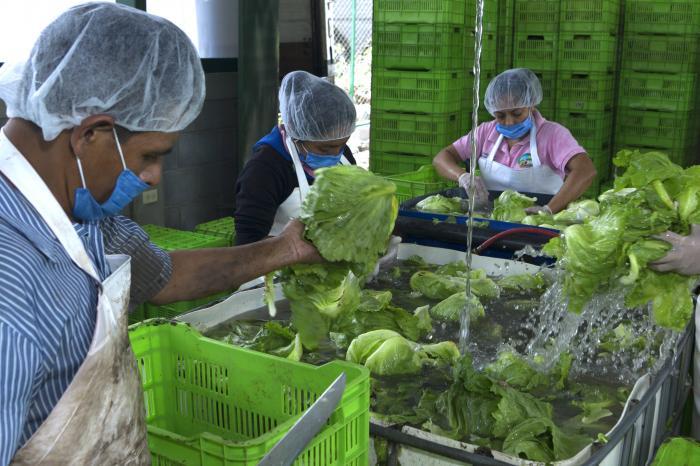 Hacia la inclusividad en las cadenas agrícolas