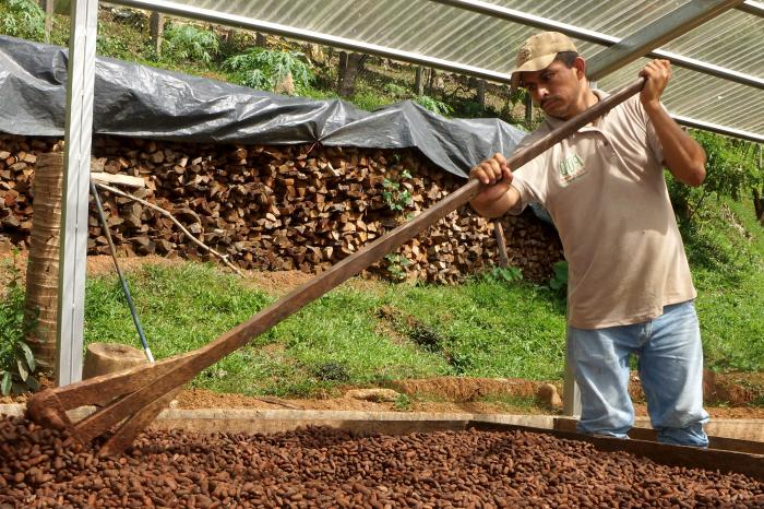 Crece interés de chocolateros internacionales en el cacao fino de Nicaragua