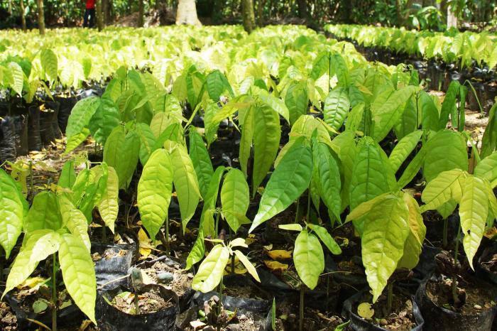 Ecuador: MOCCA prepara a profesionales para promover un cacao sostenible