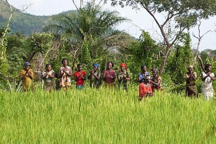 De weg naar kwaliteitsvolle rijst