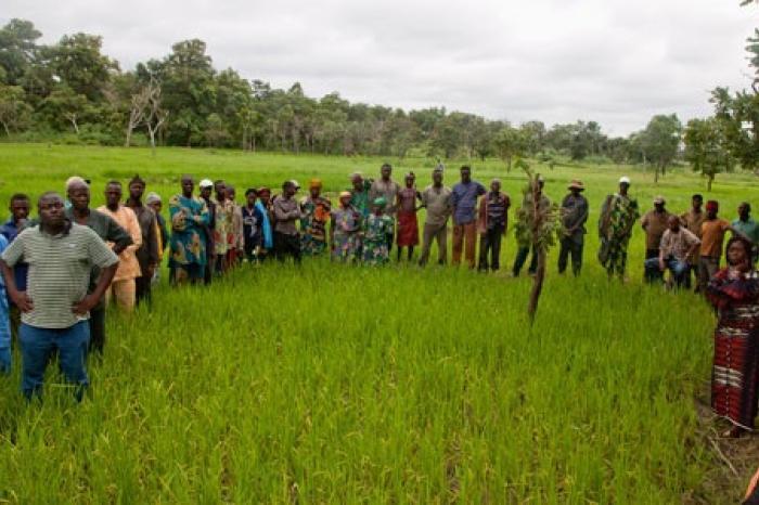 Oprichtingsvergadering van organisaties van rijstproducenten in West-Afrika